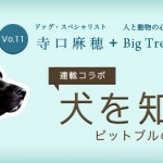 【米国発】連載コラボ企画!第11回目:ピットブルの魅力