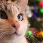 ペットとクリスマスを安全に過ごす為の10個のルール