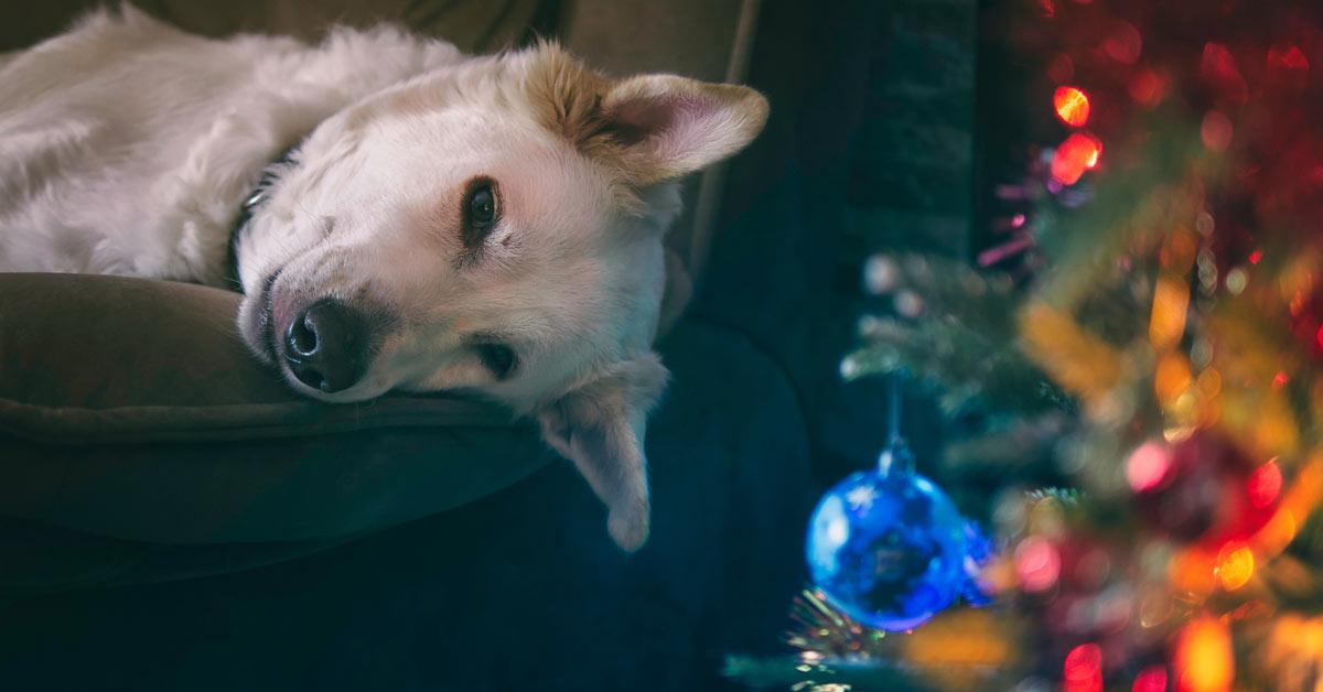 クリスマスツリーと白い犬の写真