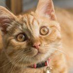 TNR(地域猫)活動が「捕まえて殺処分する方法」よりも効果的な理由