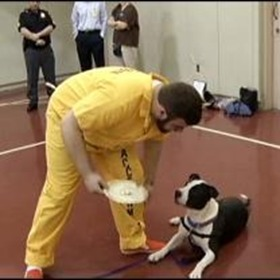 inmates-dog-training