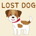 【必読】シンプルだけど成功した☆迷子になった愛犬の探し方