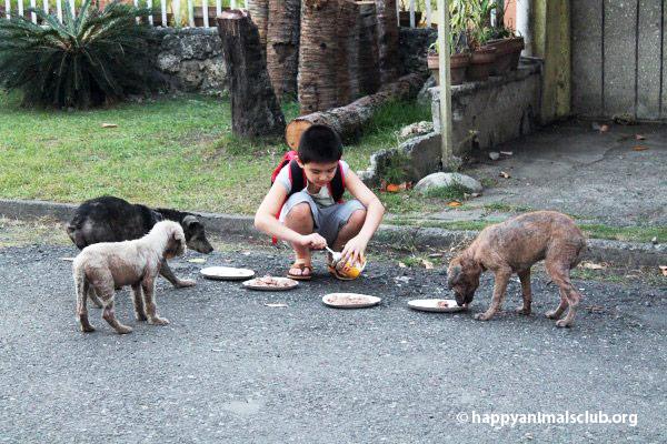 ken-feeding-dogs