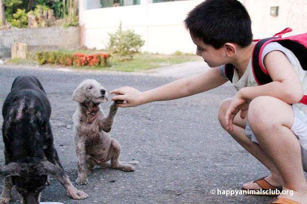 ken-feeding-dogs2
