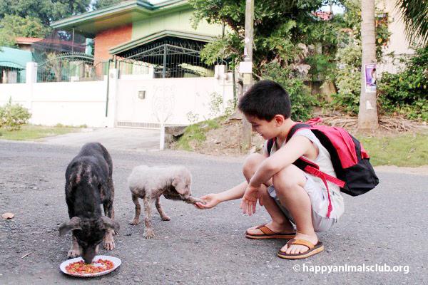 ken-feeding-dogs3