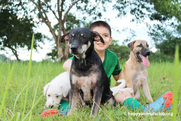 ken-healthy-dog2