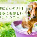 犬にも環境にも優しいノミとりシャンプー