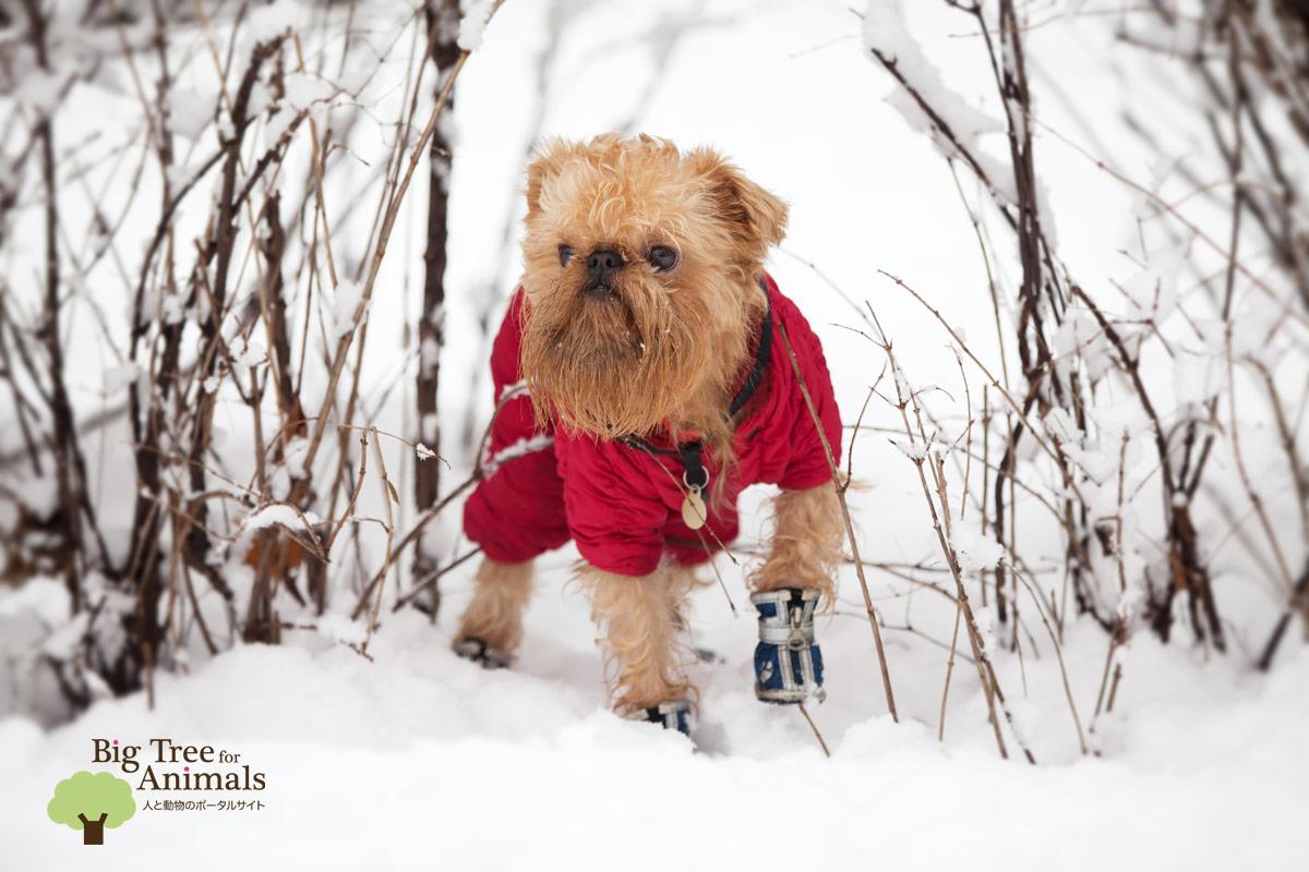 dog-winter-boots