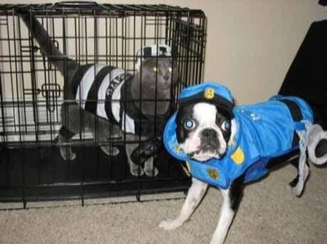 halloween-arrest