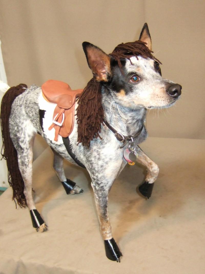 halloween-horse