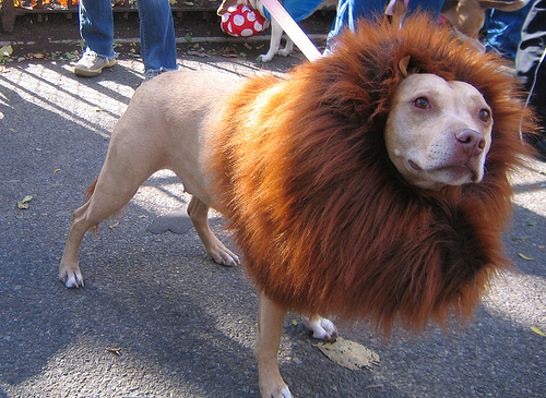 halloween-lion