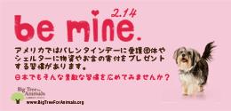 Be Mine 動物たちのバレンタインデー