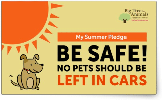 No Pets Should Be Left In Cars - My Summer Pledge Rectangular Sticker