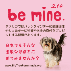 Be Mine. 2.14 動物達のバレンタインデー! by Big Tree for Animals