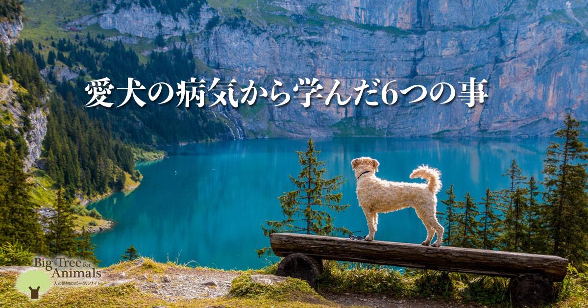 愛犬の病気から学んだ6つの事