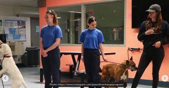 少年院の子供達と元保護犬を繋ぐプログラム