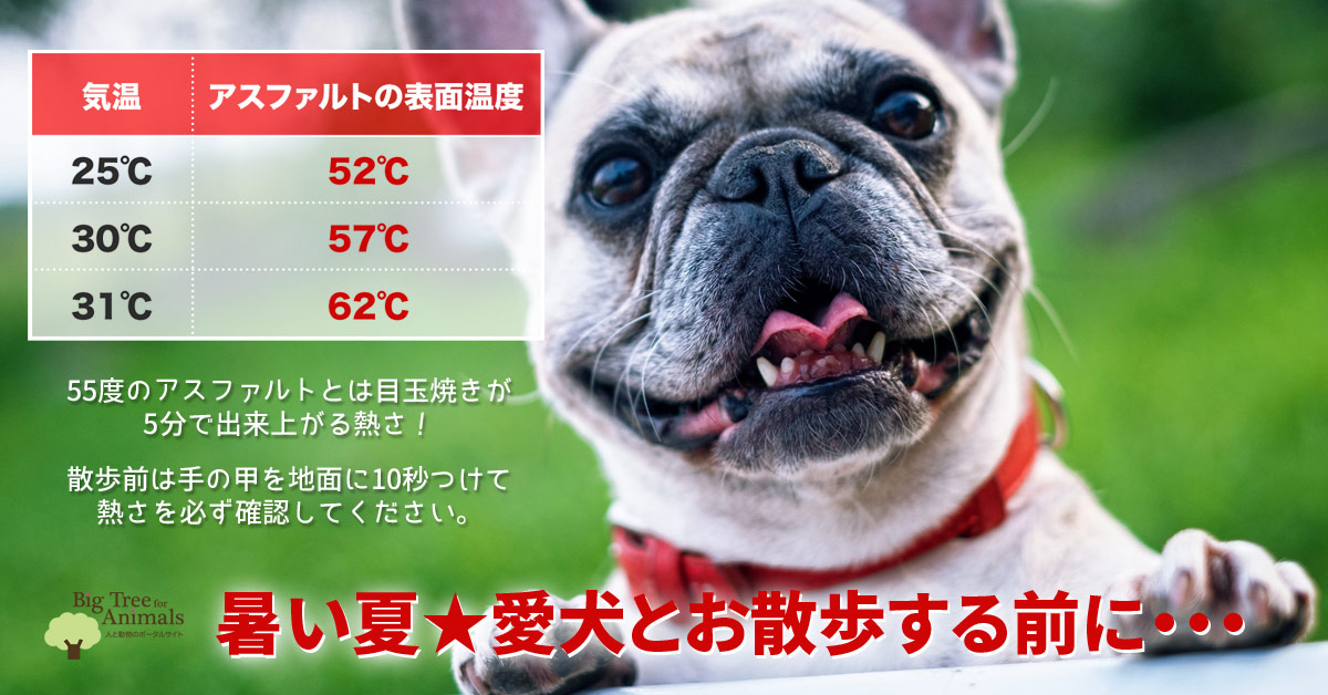 暑い夏の犬との散歩|気温とアスファルトの温度表