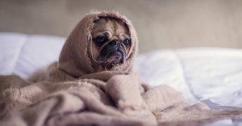 ペットの身体を冷やさない、温めることの大切さ