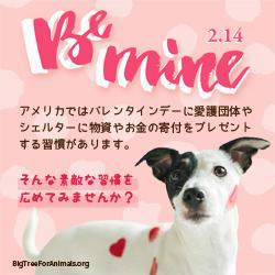 Be Mine 2.14 アメリカではバレンタインデーに愛護団体やシェルターに物資やお金の寄付をプレゼントする習慣があります。そんな素敵な習慣を広めてみませんか?