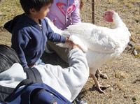 ファームサンクチュアリーの七面鳥と子供達